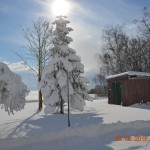 Grantræ med sne Foto;  Jørgen Nielsen