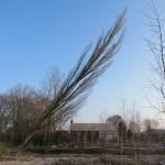 Træ der er ved at vælte Foto: Angi Doppke